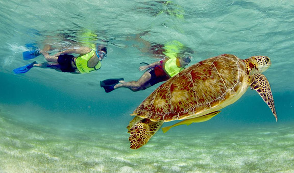 snorkeling-turtles-combo-st